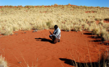 círculos de Namibia ya no son un misterio