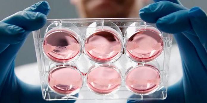 Crean una estructura semirígida tridimensional embrional