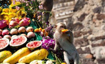 Comer fruta agranda el cerebro