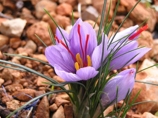 10 Flores Más Caras Del Mundo Hermosas Y Realmente únicas