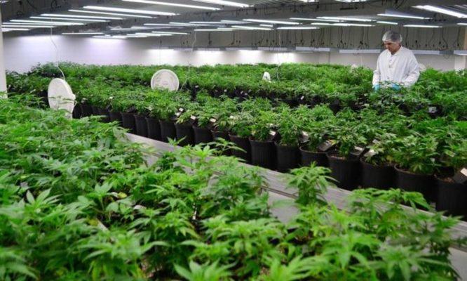 BBVA Bankinter La Caixa Marihuana