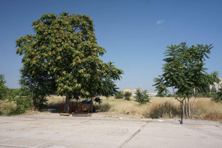 Crece la basura y los escombros en un solar de 650 viviendas fantasma.