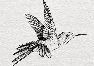 Ilustradores Y Musicos Indies Se Unen Por Los Animales En Extincion