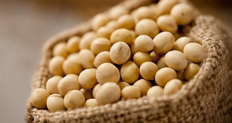 Calorias de las legumbres la soja