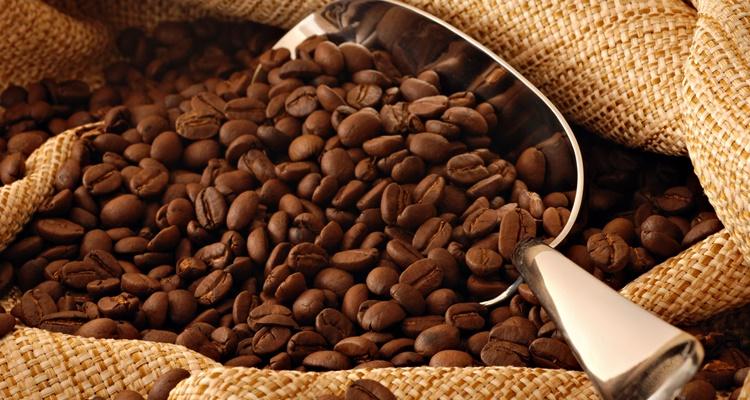 Cafes Kopi Luwak
