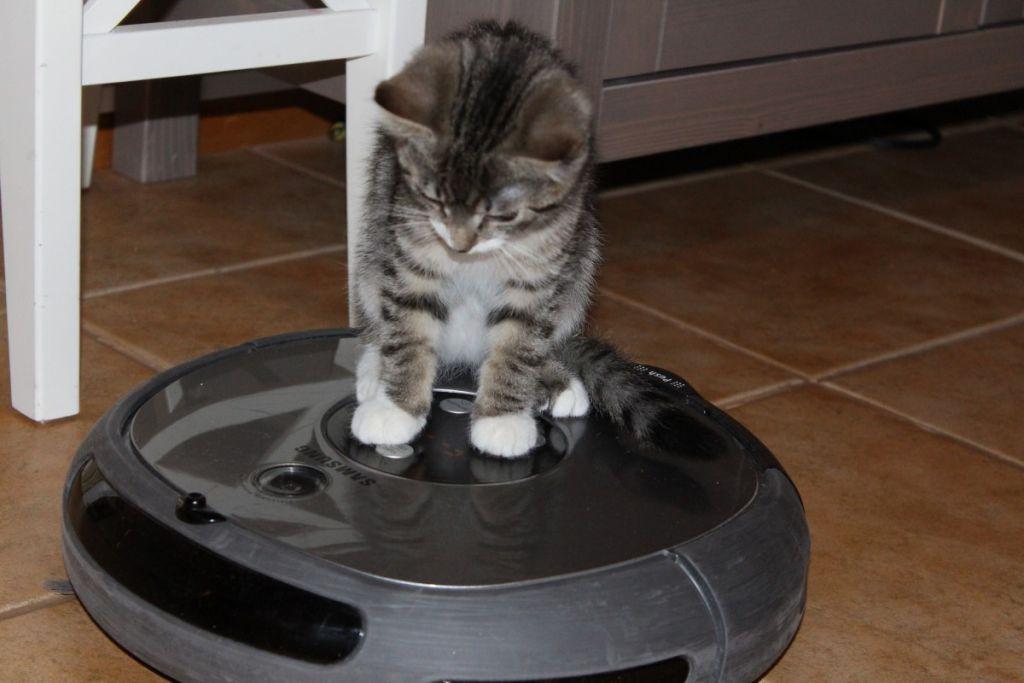 robot aspiradora gatos