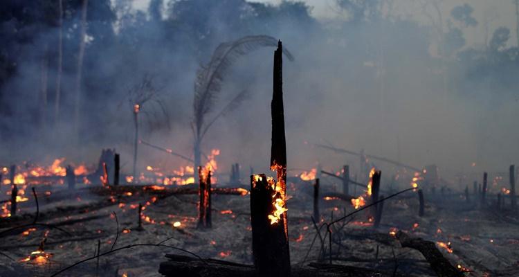 Las causas de los incendios del Amazonas