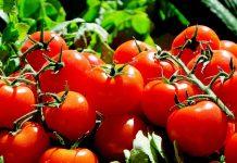 tomate-dieta