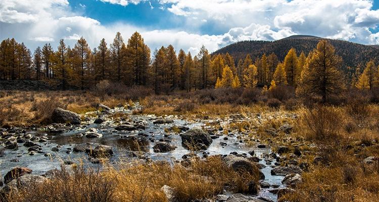 La taiga siberiana es uno de los grandes bosques del mundo