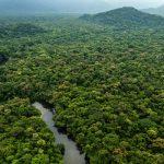 selvas bosques