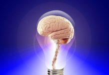 el azúcar y el cerebro