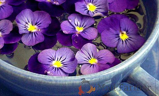 violetas en infusión