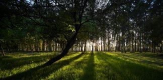Cultivo forestal de Ence en Navia (Asturias). Caixabank
