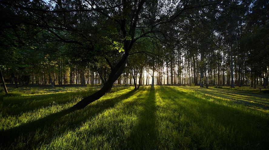 Ence firma con CaixaBank un préstamo sostenible para su negocio de celulosa