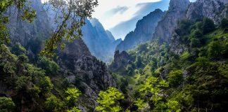 Picos de Europa, bosques de España