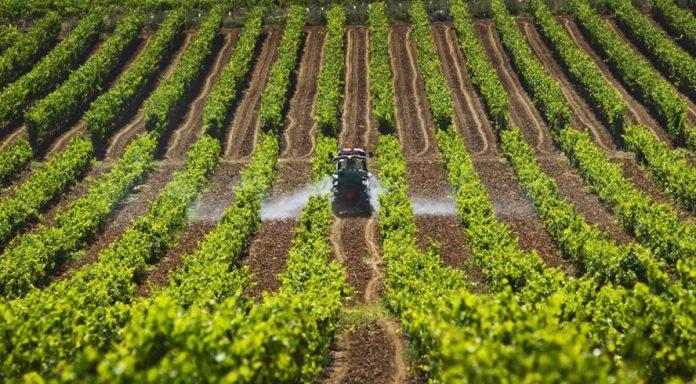 Sector agroalimentario Brexit España