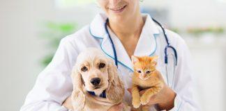 asegurar gato perro barato