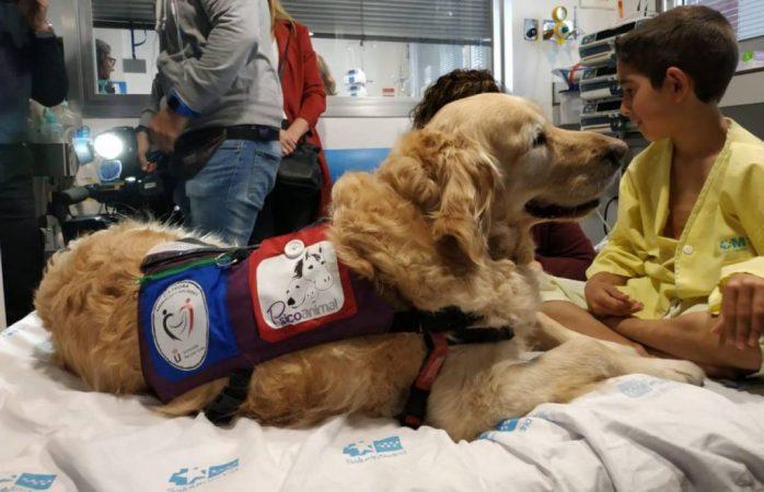 zenit perro hospitales