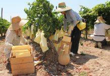 mujeres-rurales-agricultura