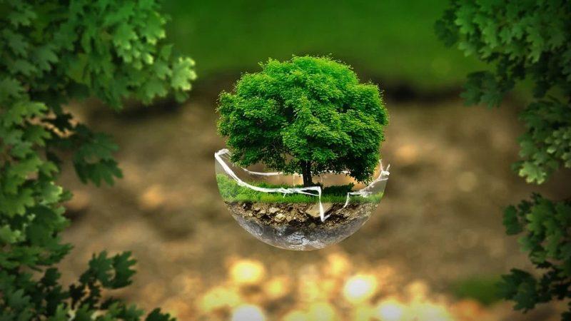 medio ambiente mundo mejor