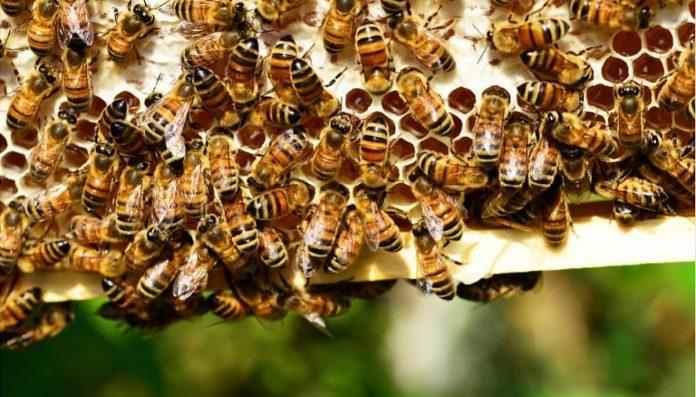 miel-esencial