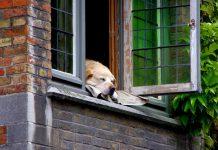 perro cuarentena