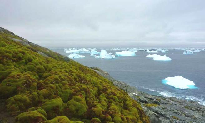antártida verde