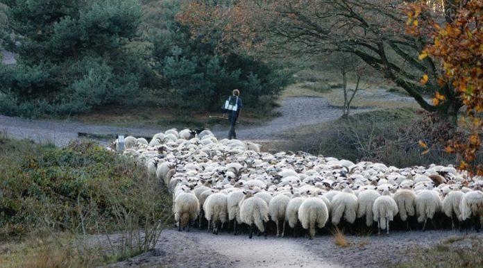 pastores-coaches-soledad
