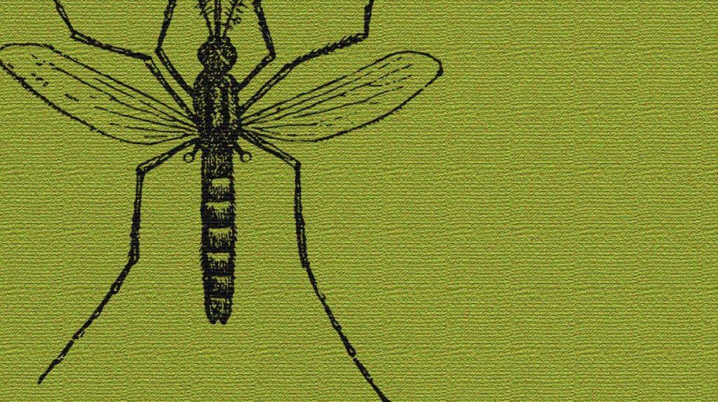Gadgets de Amazon para mantener a raya a los mosquitos este verano