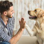 Aumenta el gasto en mascotas, perros y gatos