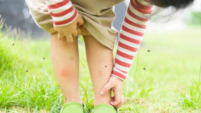 remedios-mosquitos