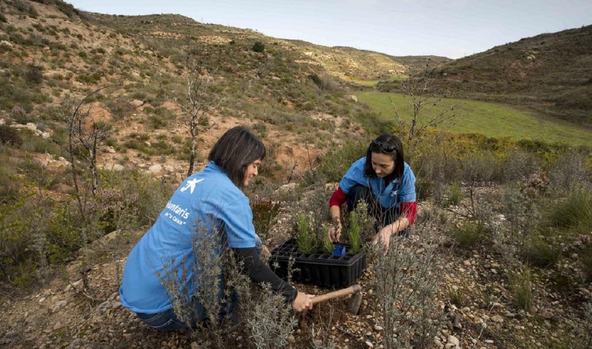 CaixaBank, líder empresarial en su lucha contra el cambio climático por séptimo año