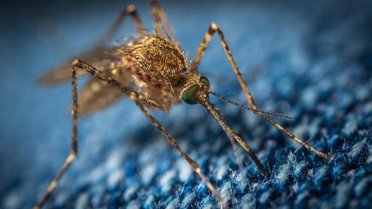 Cómo medir y montar una mosquitera corredera