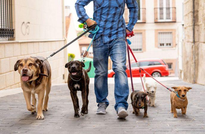negocios viables cuidado animales