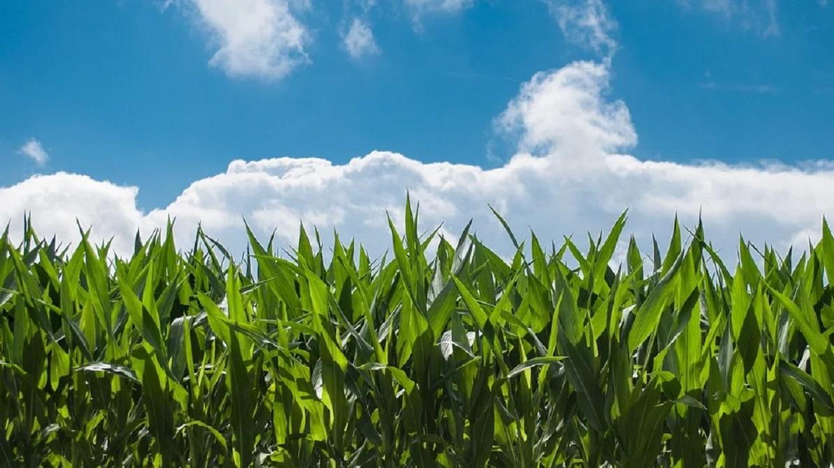 Sistema EBD en Agricultura
