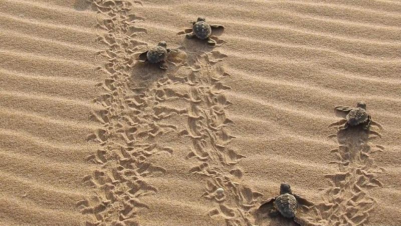 Paradores participa en la campaña 'Tortugas en el Mediterráneo'