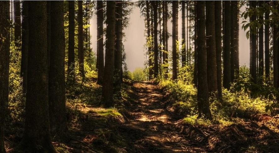 Reforestación o la receta natural contra el cambio climático