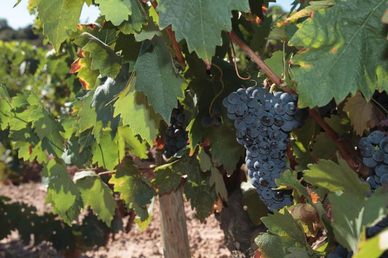 España, primer exportador mundial de vino