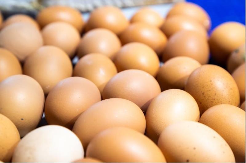 El sector del huevo pide ayudas y plazos para la reconversión que garanticen su viabilidad
