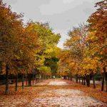 Parques bonitos de Madrid que sacan todo su esplendor en otoño